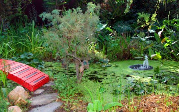 Jardín Botánico La Almunya del Sur en El Ejido.   Anyo/QVEA